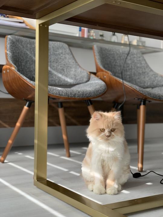 台中室內設計案例,三房改兩房的北屯簡約宅,打造人貓生活美居